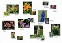 Ассортимент растений