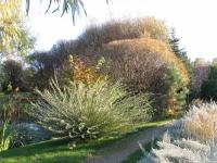 В планах Марченко - ивовый сад