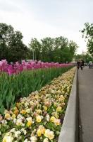 Время тюльпанов! «Зеленая неделя» 2012 в Парке Горького.