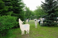 «Волки и овцы». «Зеленая неделя» 2012 в Парке Горького.