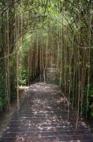 Вход в Дождливый лес с настоящим водопадом