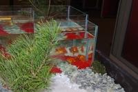 Композиция с аквариумами. Фрагмент