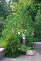 Сад «Артефакт», автор Оксана Хлебородова