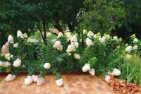 Сад «Relax-Сад», автор Боганова Катерина