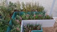 Проект «Огород в городе»