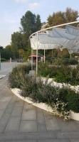 «A-mazing Garden» Мэгги Ву, Алехандро О'Нейл. Адрес Парк Музеон (вход со стороны Мароновского пер.)